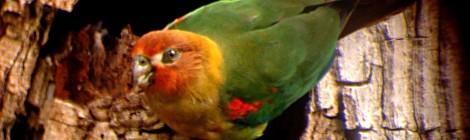 """Los buenos """"spots"""" para observar aves"""