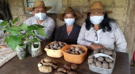 En el marco del Proyecto Andes Sur II Proyecto recupera papas nativas en los Pueblos del Sur