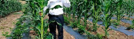 En el marco del proyecto ANDES SUR fase II Relacionan costo de alimentos con el Cambio Climático