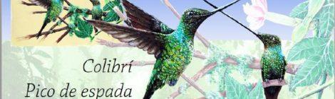 Del Proyecto ANDES SUR fase II Curso especializado para guías explora modalidad de observación de aves